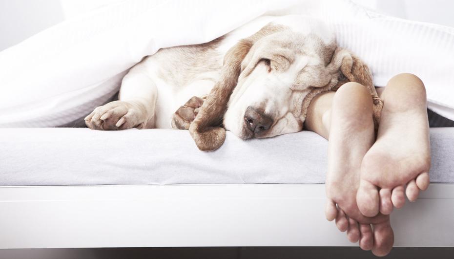 Hombre durmiendo con su perro